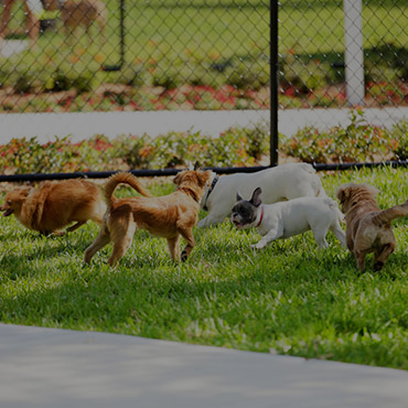 Large Dog Park at Grovecrest Villas Apartments